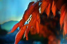 Nature Photography  orange autumn photography by LynnLangmade, $15.00