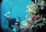 Nassau - Snorkeling and swimming with sharks