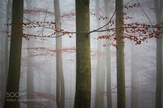 Red by carstenmeyerdierks. Please Like http://fb.me/go4photos and Follow @go4fotos Thank You. :-)