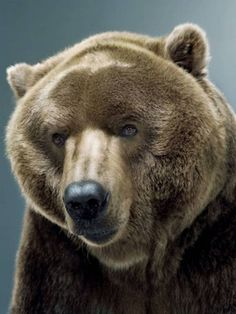 Jill Greenberg - Bear