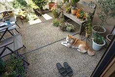 夏支度 | 柴犬マコと、