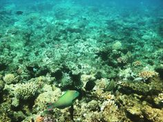 Great Barrier Reef, #Cairns #viaggioliberamente #australia #greatbarrierreef #greatbarrierreefaustralia