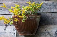 A charming floral decoration for cabin wall in the countryside__Una ridente decorazione floreale per muro di baracca in campagna my photos