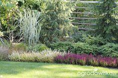 Ogród z lustrem - strona 315 - Forum ogrodnicze - Ogrodowisko Herb Garden, Home And Garden, Plant Design, Planting, Landscape Design, Grass, Mary, Gardens, Design Ideas