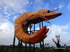View information on wildlife tourism, accommodation and tours in Australia on The Land Down Under. Giant Lobster, Wildlife Tourism, East Coast Travel, South Australia, Prawn, Kingston, 30th, Wales, Road Trip