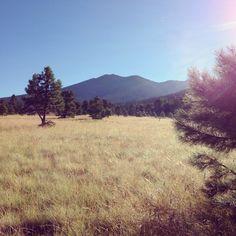 Humphreys Peak - Flagstaff Arizona. Arizona National Scenic Trail - Passage 34 #backpacking #AZT