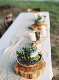 Wedding centerpieces fishbowl succulent terrarium Ideas - All For Herbs And Plants Fishbowl Centerpiece, Driftwood Centerpiece, Succulent Wedding Centerpieces, Succulent Arrangements, Succulents Diy, Driftwood Wedding, Woodland Theme Wedding, Succulent Terrarium, Terrarium Ideas