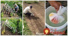 Najlepšia ochrana záhradyZmiešame niekoľko cesnakových strúčikov, 1 cibuľu, škrupiny z 3 vajec a ½ jadrového mydla. Rozmixujeme, zabalíme do tkaniny a necháme lúhovať vo vedre vody. Tekutinu následne používame ako repelent proti vysokej zvery (nastriekame … Thing 1, Cotton Candy, Gardening, Lawn And Garden, Floss Sugar, Horticulture
