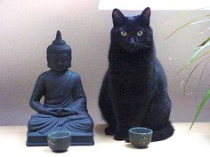 the Buddha cat