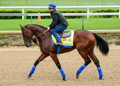 The beautiful champ American Pharoah training today. Great pic by @PMADV #KyDerby