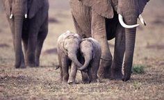 Baby Elephants Showing The Love<3