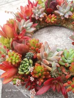 Fresh plant wreath