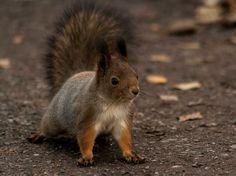 Squirrel by Jon Lindström / 500px
