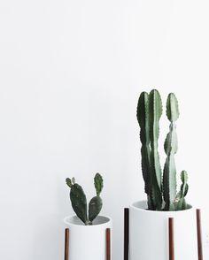 """Mija by Mirjam Flatau en Instagram: """"Cacti babies in our new home . #cactilove #modernica"""""""