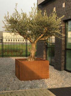 CorTen staal plantenbak Maroon 120x120x80cm Corten Steel Planters, Garden Trees, Plantation, Terrazzo, Potted Plants, Garden Inspiration, Home Deco, Landscape Design, Outdoor Living