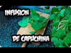 Záhradkárka mi dala neuveriteľne účinný trik, ktorým môžete zachrániť aj vaše izbovky: Mne to veľmi pomohlo! Plantar, Gardening Tips, Wild Flowers, How Are You Feeling, Organic, Nature, Youtube, Gardens, Growing Plants