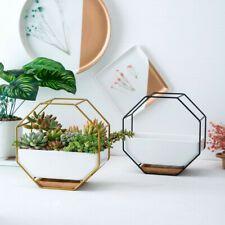 Hanging Planter In Sydney Region Nsw Gumtree Australia Free Local Classifieds With Images Ceramic Flower Pots Geometric Planter Ceramic Flowers