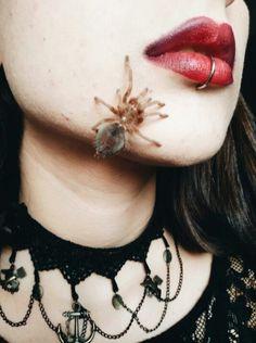 #tarantula #grammostolarosea #lip #piercing #lippiercing #gothic