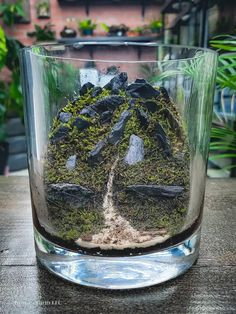 Terrarium moss Closed Terrarium Plants, Terrarium Jar, Terrarium Ideas, Types Of Moss, Wood Table Design, Mini Plants, Plant Care, Plant Decor, Glass Jars