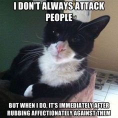 "Top 22 Grumpy Cat Memes People Here's great collection of some Grumpy Cat Memes in People style. Just read out these ""Top 22 Grumpy Cat Memes People"" and get some fun and laughing point for laugh. Funniest Cat Memes, Funny Friday Memes, Friday Humor, Funny Animal Memes, Funny Cats, Funny Animals, Cute Animals, Funny Memes, Animal Humor"