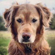 First off, older dogs are just as cute as puppies.