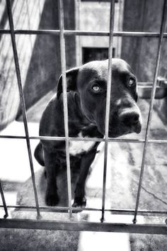shelter dog photo in black and white by susansabophotography, $75.00