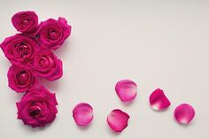 Last Long Roses
