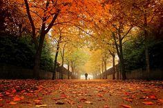 """""""Huzurlu bir sohbahar yürüyüşü yaşam; sonundaki kışa hazır, sıcak umutların ve darmadağın dünyanın ortasında kendi savaşının kahramanı olanlar için. Huzursuz bir sobhahar savrulması yaşıyor beden, bazen kahreden bazen pişmanlık veren.."""" - Meo #aforizma #aforizmalar #sözler #alıntılar #sonbahar #yürüyüş #yaşam #gelecek"""