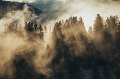 Check out Sun shining though foggy trees by dominikmartin on Creative Market