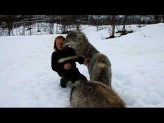 A bit of wolf lovin' - so sweet