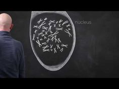 Chalkboard animations of epigenetic mechanisms, cutting edge cool! Biology Classroom, Biology Teacher, Ap Biology, Teaching Biology, Science Videos, Science Lessons, Science Education, High School Activities, Science Activities
