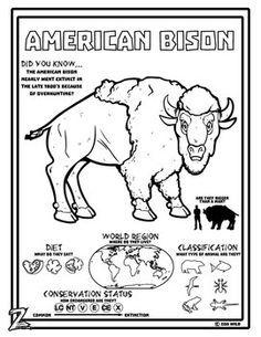 Image result for american bison craft activity