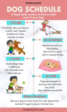 Dog Care Tips, Pet Care, Dog Love, Puppy Love, Puppy Schedule, Dog Enrichment, Dog Facts, Purebred Dogs, Diy Stuffed Animals