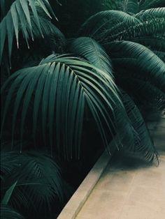 tannergoods: Dark palms