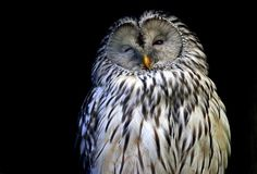 Winking Ural owl by Rainer Leiss on 500px