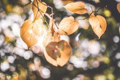 Plants, Blog, Pictures, Nature, Nice Asses, Flora, Blogging, Plant, Planting