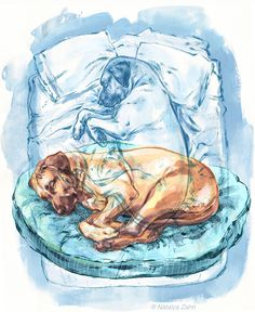 Oscar the Rhodesian Ridgeback sleeps on the bed Cute Dogs Breeds, Dog Breeds, Dog Barking Video, Three Dog Night, Lion Dog, In The Zoo, Majestic Animals, Animal Posters, Sleeping Dogs