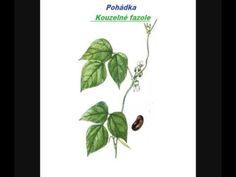Pohádka - Kouzelné fazole