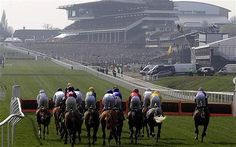 Cheltenham - The Festival of all Festivals Civil Engineering, Horse Racing, Horses, Change, Places, Sports, Festivals, Hs Sports, Concerts