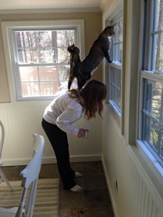 We need to look outside - http://www.seethisordie.com/animalsbeingjerks/we-need-to-look-outside/ #animals #cats #funny #fun