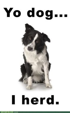 Border Collie... my dream dog, if I lived on a farm. They are crazy smart and active. I'd name mine FLY