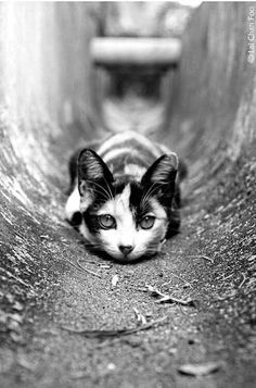 Bokeh black and white photography funny animals, funny cats, cute animals, animals beautiful Crazy Cat Lady, Crazy Cats, Beautiful Cats, Animals Beautiful, Beautiful Pictures, I Love Cats, Cool Cats, Fotografia Pb, Animals And Pets