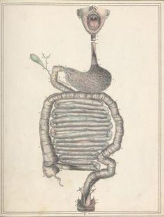 Jules Cloquet and Haincelin - Digestive tract, from Manuel d'anatomie descriptive du corps humain, representée en planches lithographiées, 1825