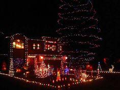 Lights on Display Christmas Tree, Display, Lights, Times, Holiday Decor, Teal Christmas Tree, Floor Space, Billboard, Xmas Trees