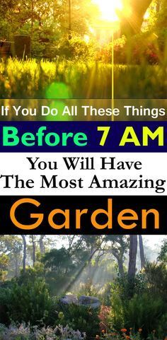 Do a few of these things in your garden in the EARLY morning, and you'll see incredible results in no time!