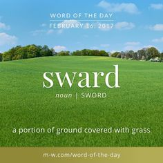 Sward: a word autocorrect does not like. Also, a portion of ground covered with grass. #merriamwebster #dictionary #language