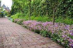Gebakken klinkertjes en vaste planten border met bodembedekkende vaste planten, kruiden en kleine vruchtbomen.  Tuinontwerp: De Tuinregisseurs Clematis, Sidewalk, Lawn, Side Walkway, Walkway, Walkways, Pavement