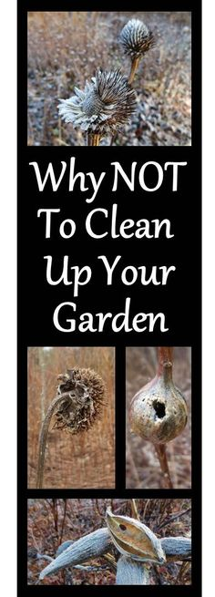 Wildlife love messy gardeners! Standing dried plants provide important habitat for insects and birds.