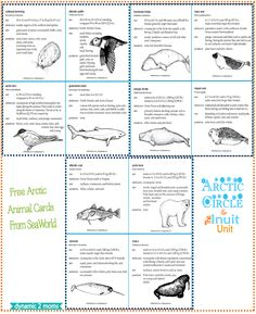 Arctic and Inuit Unit Study. Free homeschool unit study about the Arctic and Inuit. Free homeschool lapbook and hands-on ideas. Grade 2 Science, Science Lessons, Science Activities, Science Ideas, Teaching Science, Earth Science, Artic Animals, List Of Animals, Arctic Habitat