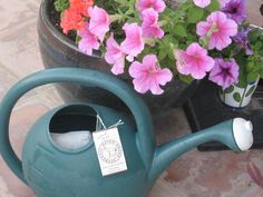 I love using teabags in the garden! Adding teabags to your garden will infuse your soil with quality micronutrients that influence your soil. Start using teabags in garden and see what happens! Gardening For Beginners, Gardening Tips, Cold Frame Gardening, Child Friendly Garden, Composting Process, Compost Soil, Used Tea Bags, Plant Health, Beneficial Insects